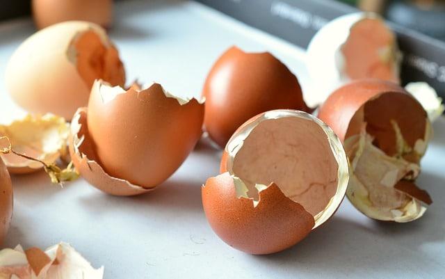 skorupki jajek na białe firanki